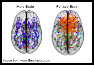 the female brain review book
