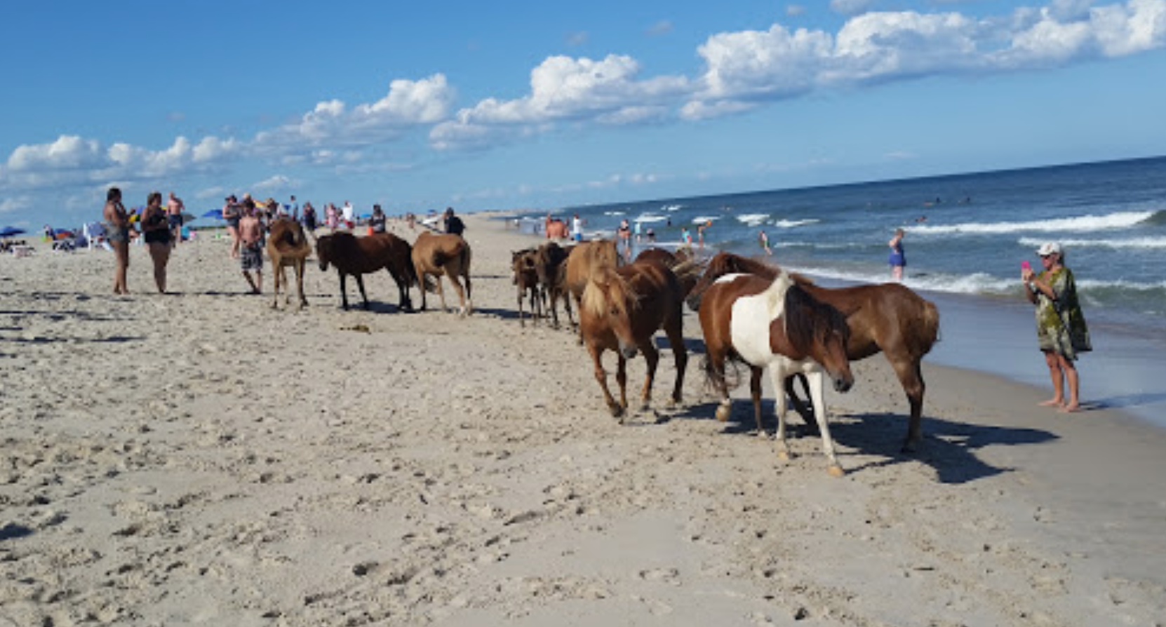 Beach Camping with the Ponies – Assateague Island